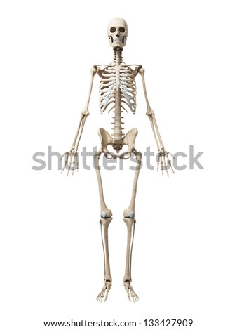 3d rendered illustration of the skeleton - stock photo
