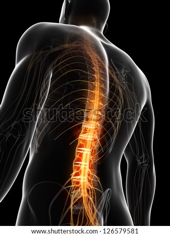 3d rendered illustration of the spinal chord - stock photo