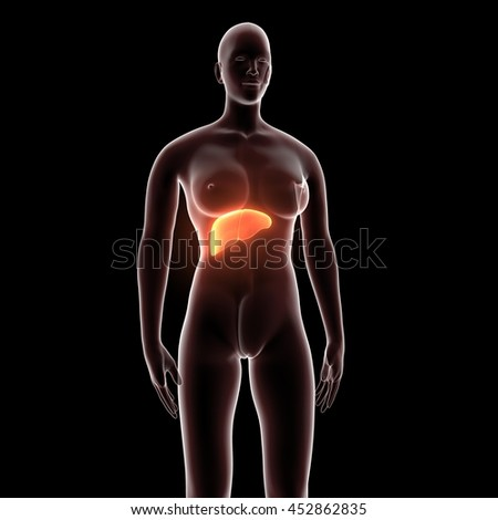 3d rendered illustration of woman liver system - stock photo