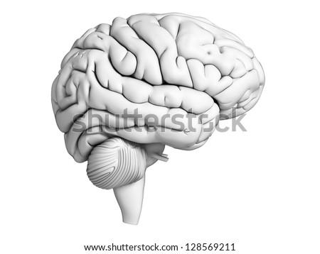 3d rendered illustration - white brian - stock photo