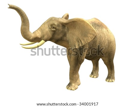 3D rendered isolated scenting elephant.