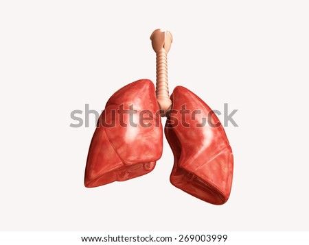 3d rendered lungs isolated on white background - stock photo