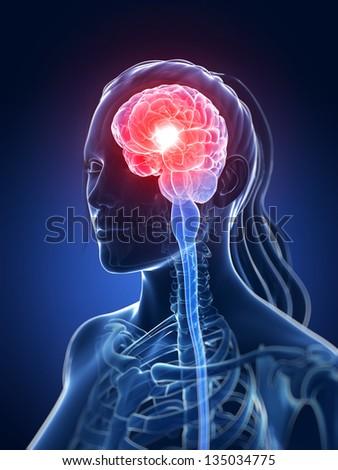 3d rendered medical illustration - female brain - stock photo