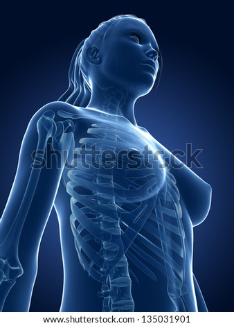 3d rendered medical illustration - female skeleton