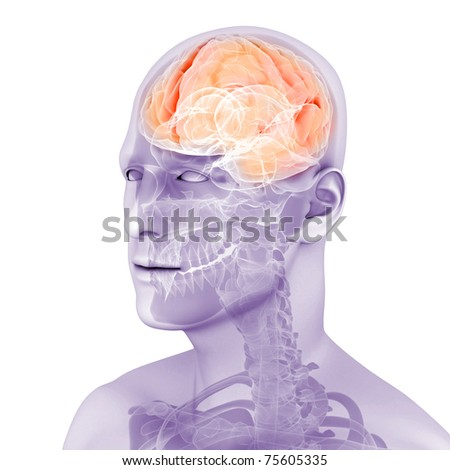 3d rendered medical illustration of a human brain - stock photo