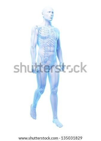 3d rendered medical illustration - walking guy - stock photo