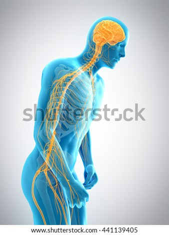 3d rendered, medically accurate 3d illustration of parkinson - stock photo
