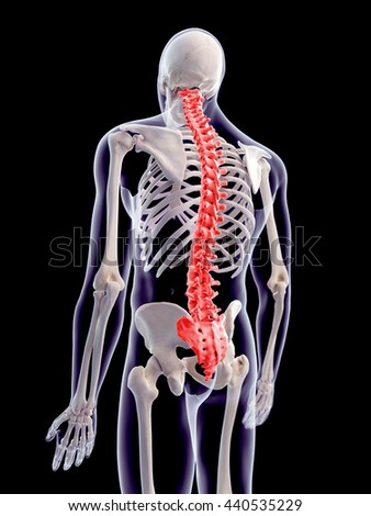3d rendered, medically accurate 3d illustration of the human spine