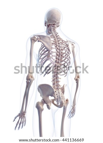 3d rendered, medically accurate 3d illustration of the human spine - stock photo