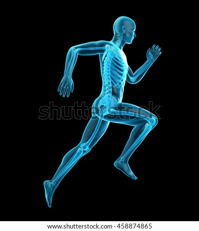 3d rendered medically accurate illustration of a runners skeleton - stock photo