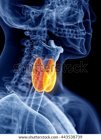 3d rendered, medically accurate illustration of the thyroid gland - stock photo