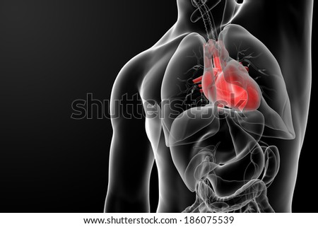 3d rendered of the human heart - front view - stock photo