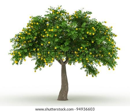 3d rendered orange tree full of yellow oranges isolated over white - stock photo