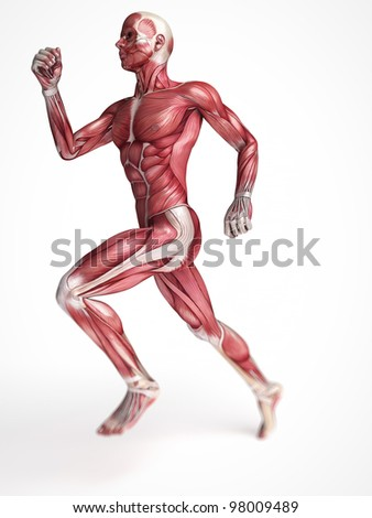 3d rendered scientific illustration of the males muscles - stock photo