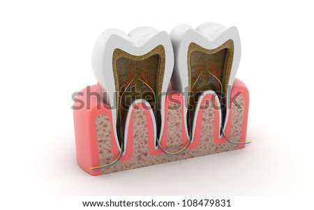 3d rendered tooth cut isolated on white background