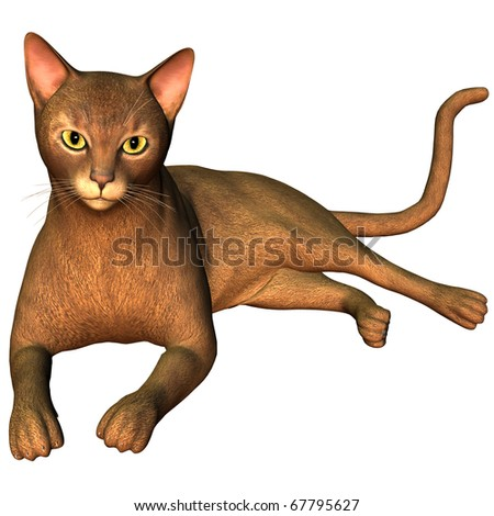 3d rendering  a breed cat as illustration