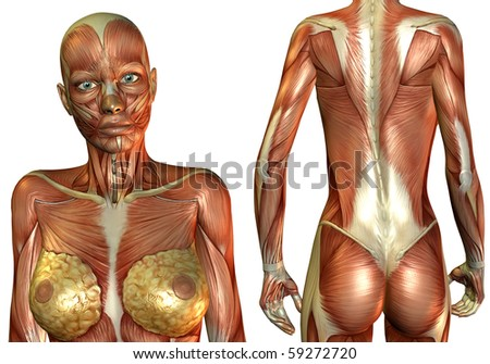 3D Rendering breasts and back muscle - stock photo