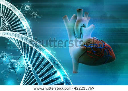3d rendering Human heart and dna - stock photo