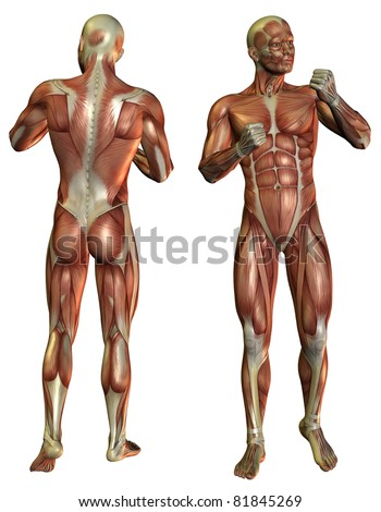 3D Rendering Muscle Man in the fighters pose in front and rear - stock photo