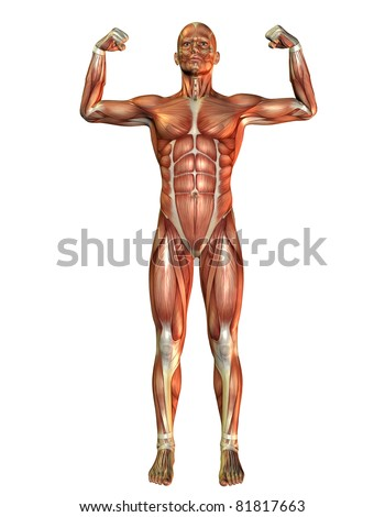 3D Rendering Muscle man pose in force - stock photo