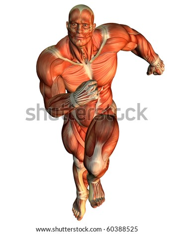 3D rendering muscle ongoing study of male body builders - stock photo