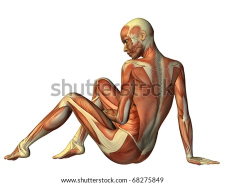 3D rendering muscle seated woman from behind - stock photo