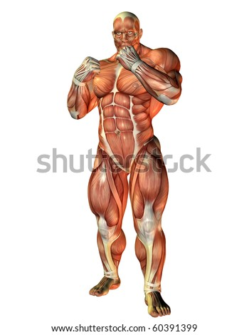 3D Rendering Muscle study of a boxer - stock photo