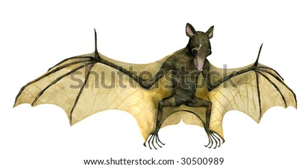 3D rendering of a bat with spread wings on white background - stock photo