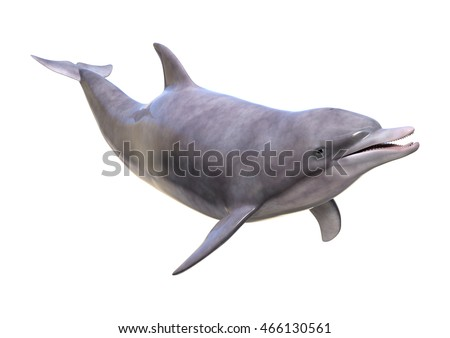 3D rendering of a dolphin isolated on white background