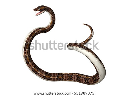 3D rendering of a Gaboon viper or Bitis gabonica snake isolated on white background