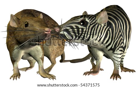 3D Rendering of a House rat and rat surreal look at the Zebra