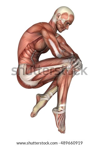 3d rendering male anatomy figure muscles stock illustration, Muscles