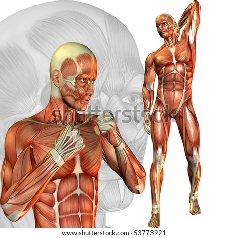 3D rendering of a male Sudie muscle in various poses - stock photo