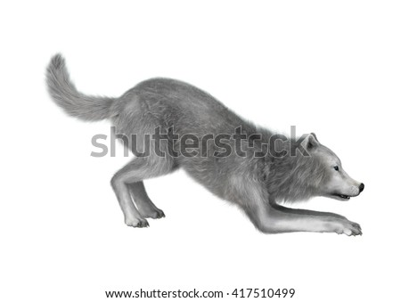 3D rendering of a polar wolf isolated on white background