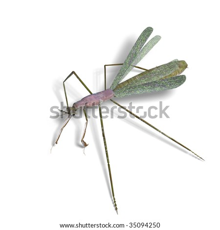 3D rendering of a praying mantis with clipping path and shadow over white