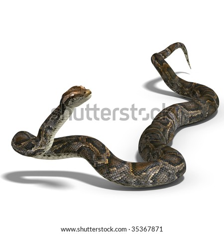 3D rendering of a royal python with clipping path and shadow over white