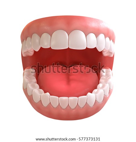 3d Rendering Human Teeth Open Mouth Stock Illustration 577373131