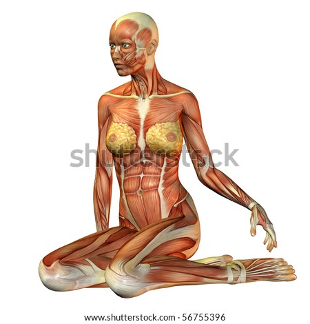 3D rendering of muscle of a seated woman - stock photo