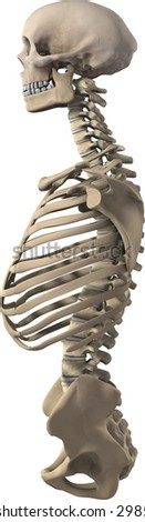 3d rendering of skeleton torso and skull with organs - stock photo