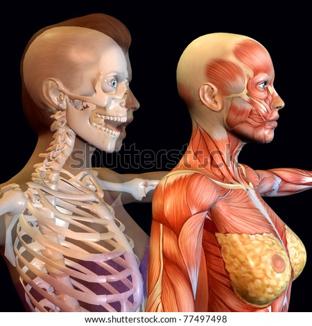 3 d rendering of the female anatomy as illustration - stock photo