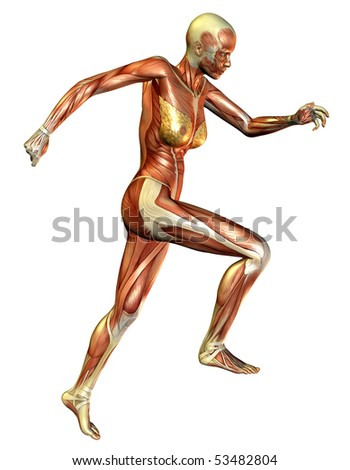 3D rendering of the muscle when the woman running - stock photo