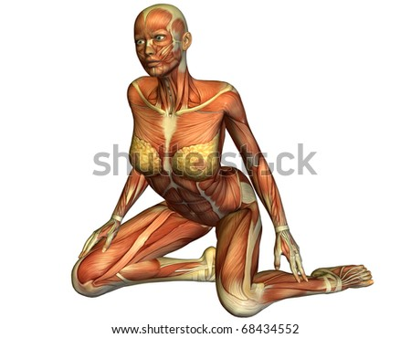 3D rendering of the muscles of a kneeling woman