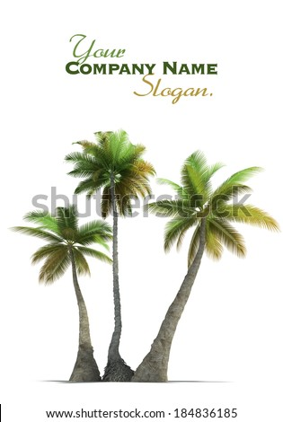 3D rendering of three  palm trees on a neutral white background