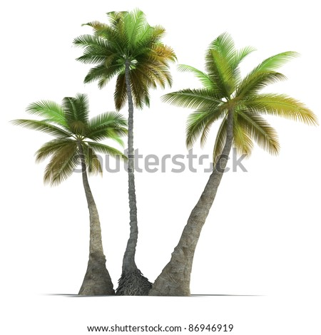 3D rendering of three  palm trees on a neutral white background - stock photo