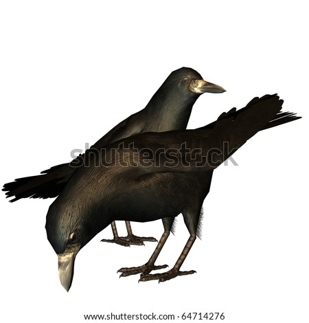 3d rendering two crows on fodder search as illustration