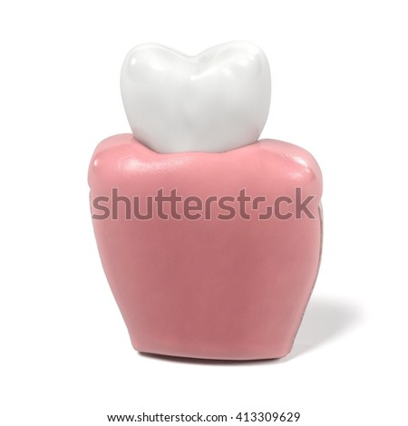 3d renderings of tooth anatomy