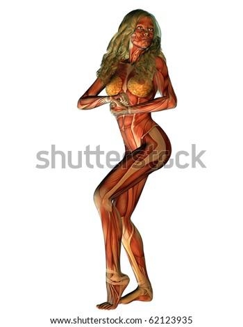 """gehrke's """"body worlds"""" set on shutterstock, Muscles"""