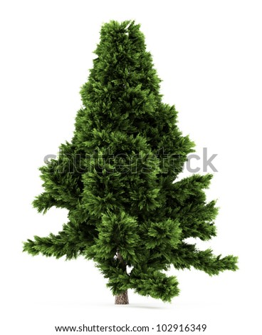 3d Scots Pine tree isolated over white