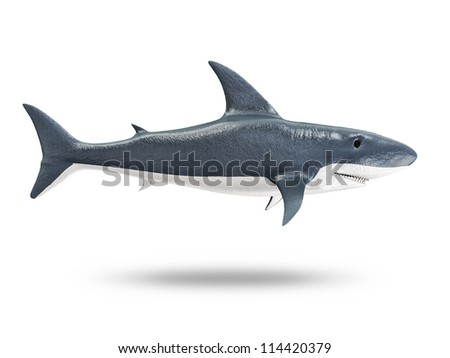 3d Shark isolated on white background