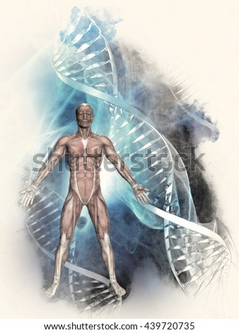 3D sketched image of a male figure with muscle map on a medical background with DNA strands - stock photo
